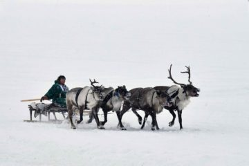 Reindeer Herder's Day date discussed