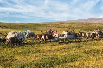 Scientists study COVID-19 impact on North inhabitants