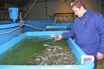 Fish breeding in Taimyr
