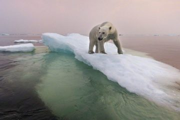 Arctic ice can melt completely