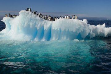 Scientists study relationship between Arctic and Antarctic