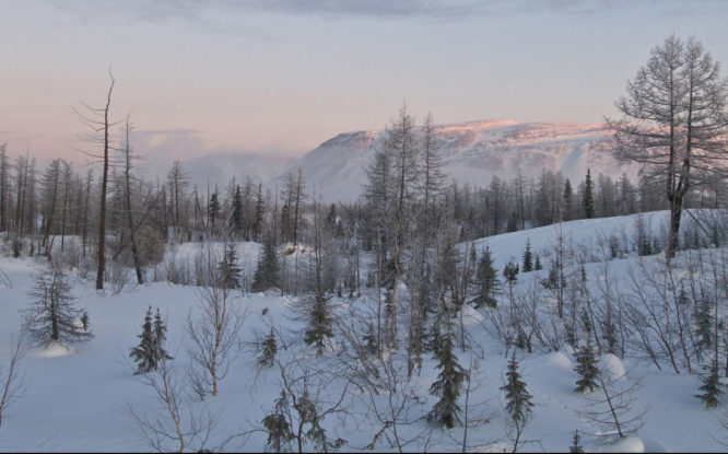 Forests counted on Taimyr