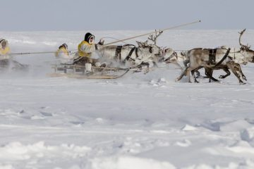 Taimyr Indigenous peoples can get grants up to 6.5 million rubles