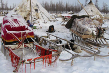 National sledges making tradition to be revived in Taimyr