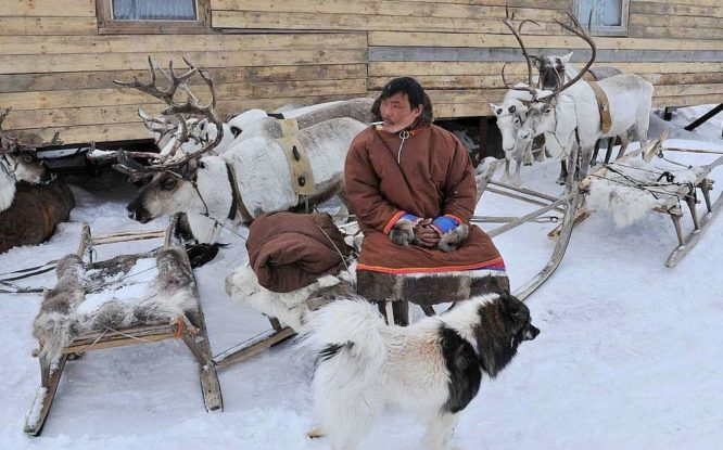 Reindeer herders to rest for free
