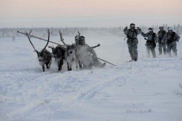 Northern Fleet infantrymen to be taught reindeer riding