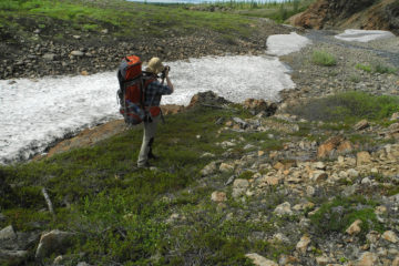Greens may return to Arctic due to melting snow