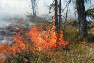 Number of fires in Arctic to increase