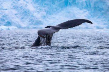 Scientists record Arctic ecosystem violation due to warming