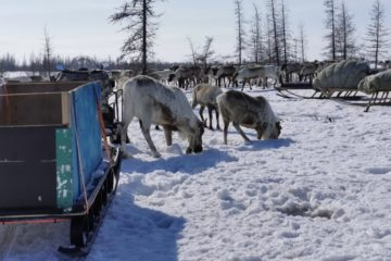 Rules for living to be created in Arctic