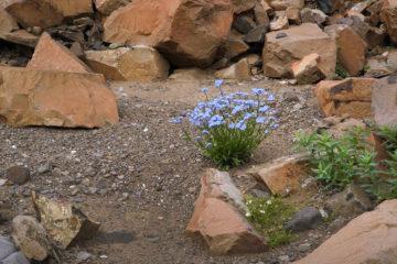 Scientists to restore Arctic soils fertility
