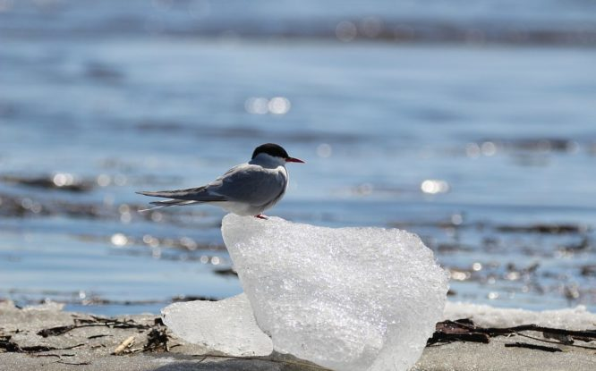 Norilsk residents interested in birdwatching