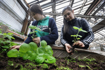 Difficulties of planting flowers in Norilsk