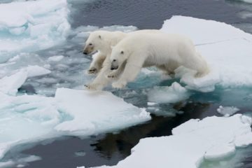 Arctic ice melting faster than expected