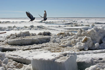 Ice drift on Yenisey near Dudinka expected soon