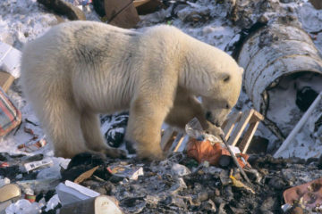 Waste sorting to help release Arctic of plastic