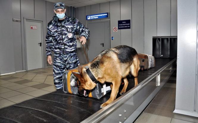 Taimyr transport police canine team turns 20