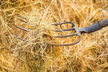 On Taimyr haymaking tradition resumed