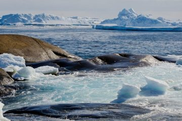 Scientists accidentally discovered Earth's northernmost island