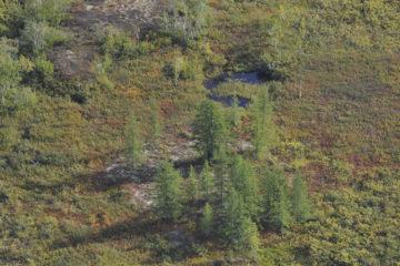 Shrubs accelerate permafrost melting