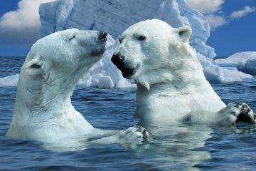 Nobody allows hunting polar bears in Russia